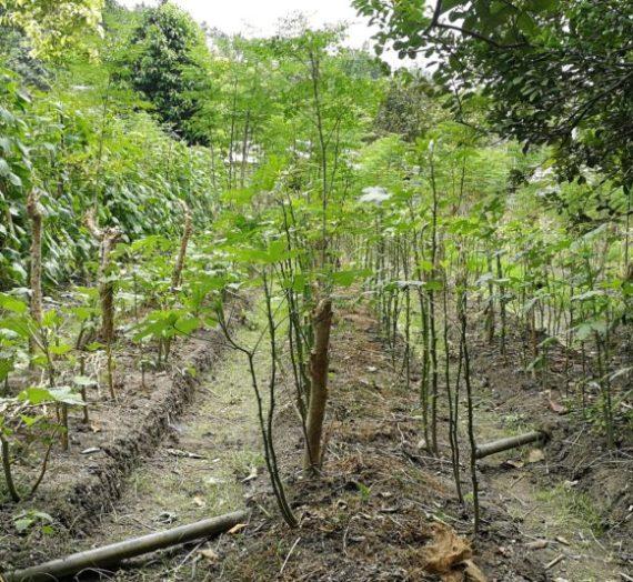 Three Reasons Why I Decided to Focus on Organic Farming
